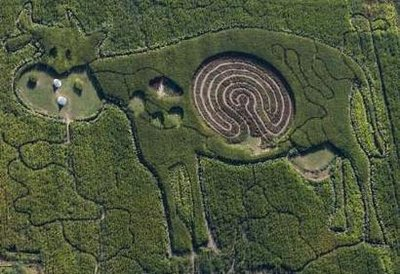 An aerial view shows a labyrinth in the form of a cow that is cut into a corn and hemp field in Marienfelde outside Berlin September 2, 2009.  Officials think that aliens may be trying to communicate that either 1) They're tired of eating mutilated cows, or 2) They're taunting us that they can mutilate cows whenever they choose.  'Time can only tell,' stated Hanz Fregman, Deputy Chief of the Berlin Commission on Alien Affairs.  (REUTERS)